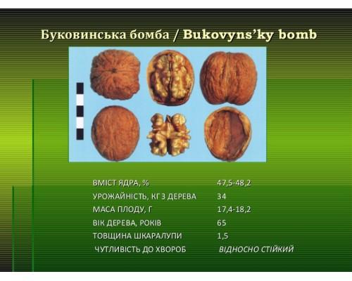 Буковинская Бомба(ПРИВИТЫЙ) однолетний