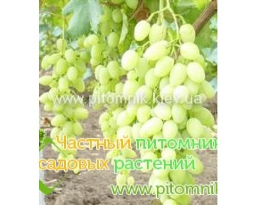 Саженцы винограда сорт Долгожданный