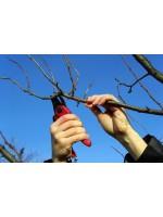 Догляд за деревами